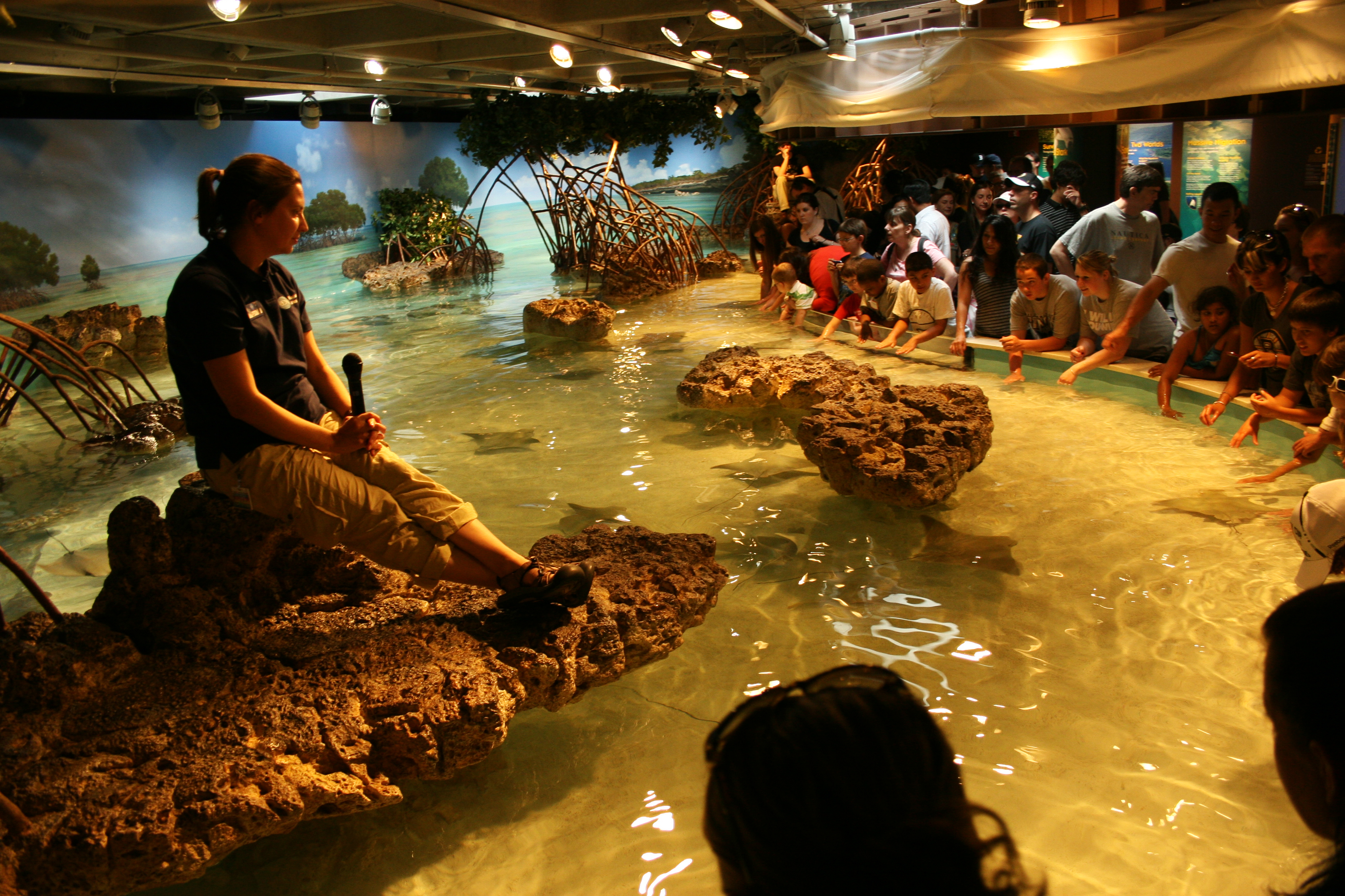 Summer To Do List The New England Aquarium Monkeyandthebug